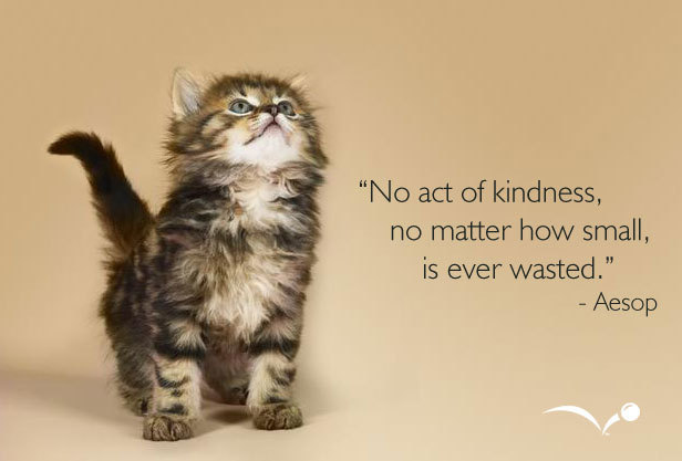 love and kindness quotes. The Kindness Report (or the Results of my Mini Kindness Challenge)