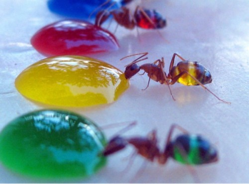 In my friend's defence, I started the ant conversation by sharing this image with him... (from )