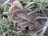 Frozen leaves, Jan 2105